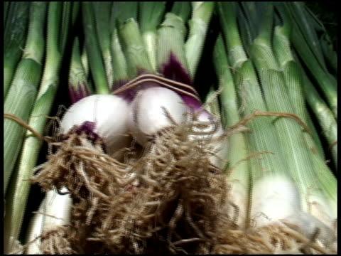 organiche cipolle d'inverno e cipollotti - alliacee video stock e b–roll