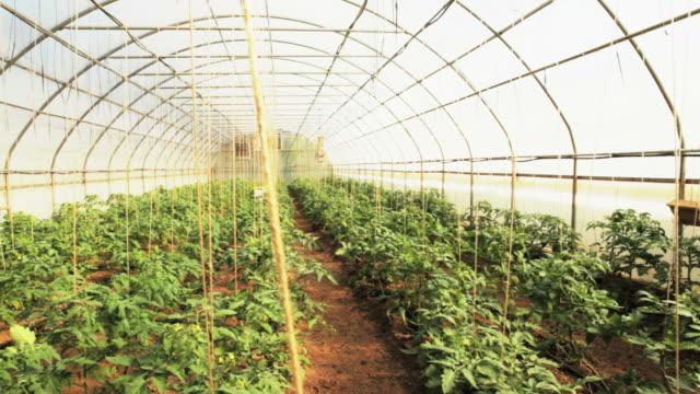 Organic Tomatoes video