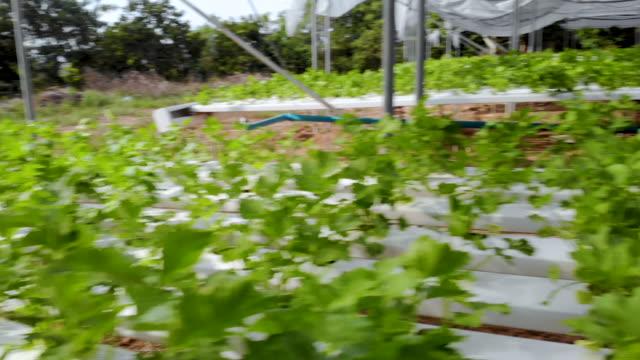 Organic vegan farm fast panning right