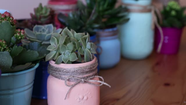 organizing small colorful cactus pots on a shelf, putting succulents in an order video