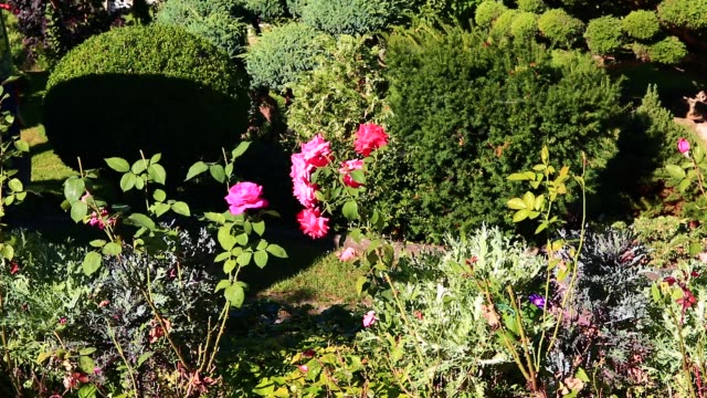 Oriental garden with buxus roses and other plants