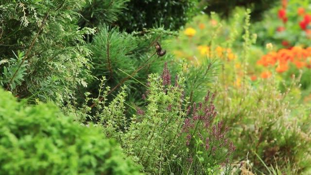 sfondo video a colori autunnale del giardino ornamentale - giardino pubblico giardino video stock e b–roll