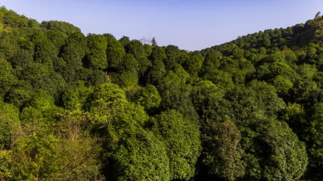 osmanthus fragrans - provinz guangxi stock-videos und b-roll-filmmaterial