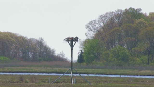 Osprey nest - HD 30F
