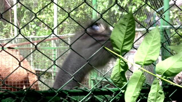 ostrich - morrhår bildbanksvideor och videomaterial från bakom kulisserna