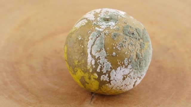 腐とカビの生えたオレンジ - 腐敗点の映像素材/bロール