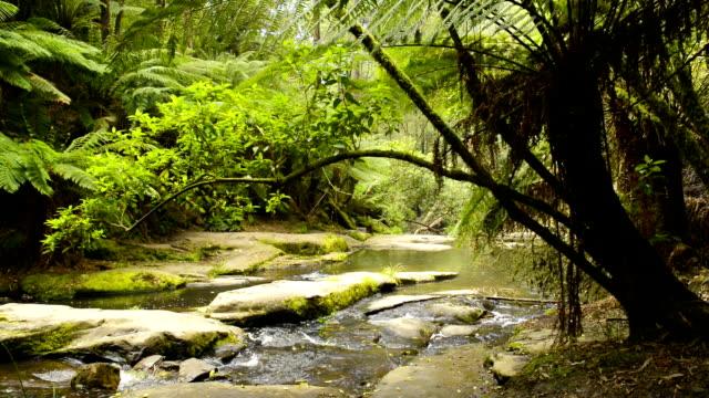 Otway National Park video