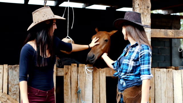 our youngest animal horse - barns stock videos & royalty-free footage