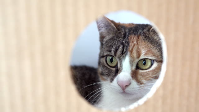 Out of the box, the cat looks into the round hole - vídeo
