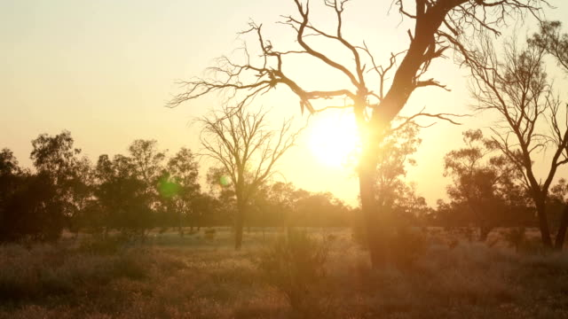 Outback Australian Sunset video
