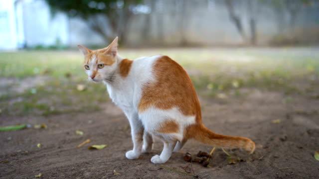 gatto pooping all'aperto - mammifero video stock e b–roll