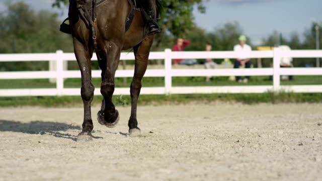 vidéos et rushes de dof: out-of-focus gens regarder cheval effectuant le trot en extérieur manège de sable - dressage équestre