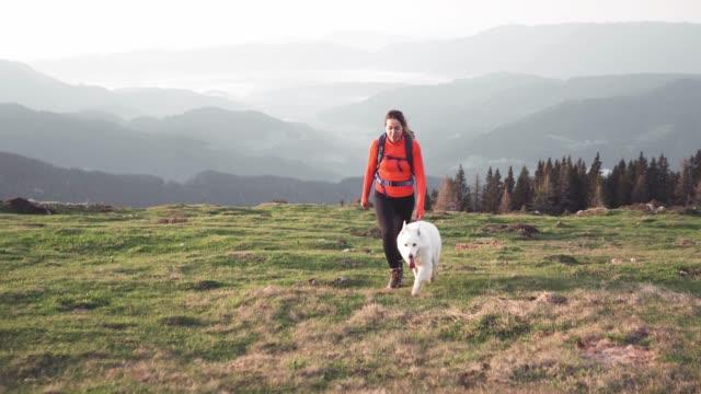 outsanding bergsutsikt och vandrare med hennes hund - nationalpark bildbanksvideor och videomaterial från bakom kulisserna