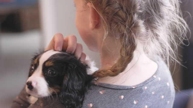 Over the shoulder shot of a young girl holding adorable puppy in a living room video