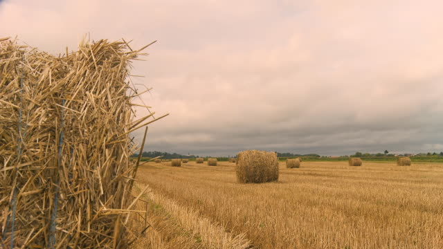 HD DOLLY: Overcast Field video