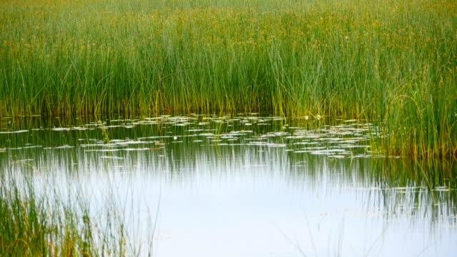 overgrown pond wetland landscape