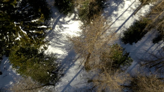 Overhead aerial drone flight establisher over snowy sunny forest woods. Winter snow in mountain nature outdoors. straight-down perspective travel exploring Alps. 4k top view video video