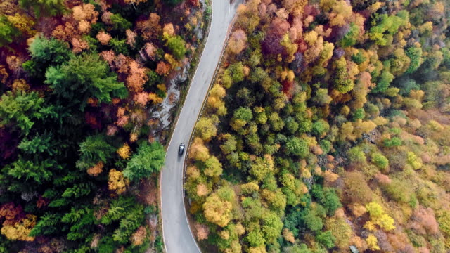Overhead aerial top view over car travelling on road in colorful autumn forest.Fall orange,green,yellow red tree woods.Mountains street path establisher.4k drone flight straight-down establishing shot