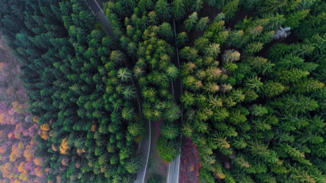 overhead aerial top view over hairpin bend turn road in countryside autumn forest.fall orange,green,yellow red pine tree woods.fog street path establisher.4k drone flight straight-down establishing - in cima video stock e b–roll