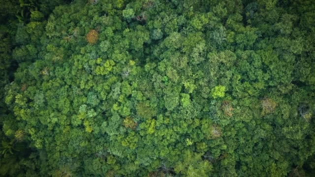 Overhead aerial view of a dense tropical rainforest