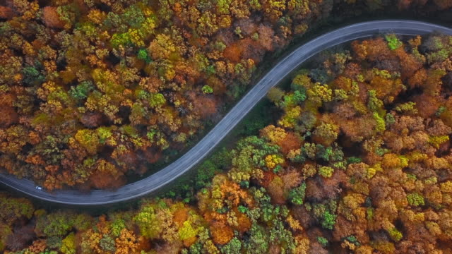 Overhead aerial view of country road in sunny autumn forest