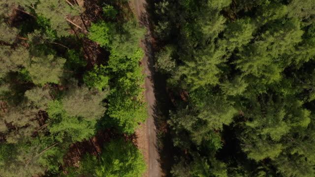 overhead-drohne top-down-ansicht eines dirt trail-pfads im reichen grünen wald im sommer - aerial view soil germany stock-videos und b-roll-filmmaterial