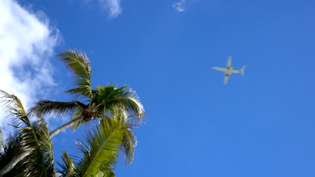 4K Overhead view of airplane flying across clear blue sky and palm tree tops