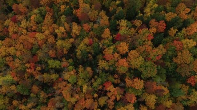 overhead-ansicht der hellen neuengland herbstfarben (4k) - ahorn stock-videos und b-roll-filmmaterial