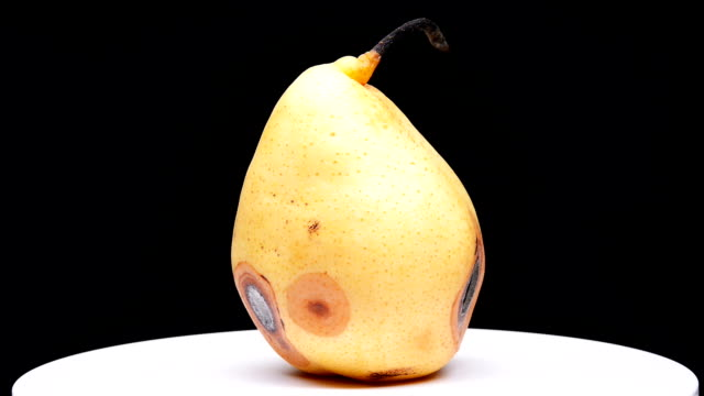overripe pear rotating and pause on black background overripe pear rotating and pause on black background pear stock videos & royalty-free footage