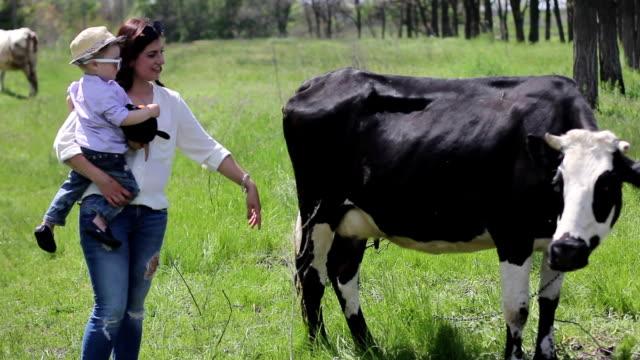 概要の異なるタイプの牛 ビデオ