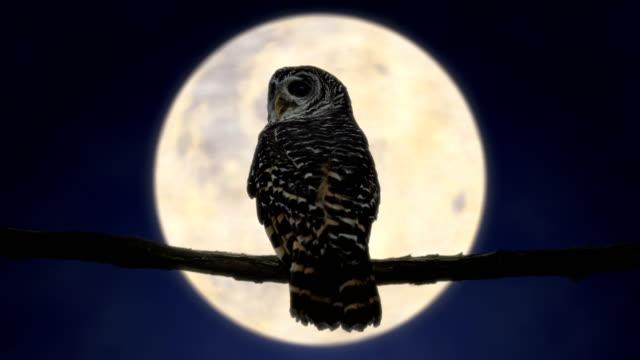 stockvideo's en b-roll-footage met uil in de nacht met volle maan (4k) - uil