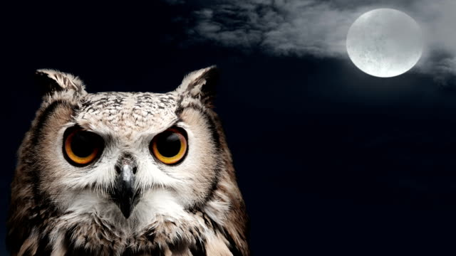 Owl at night with moon and clouds video