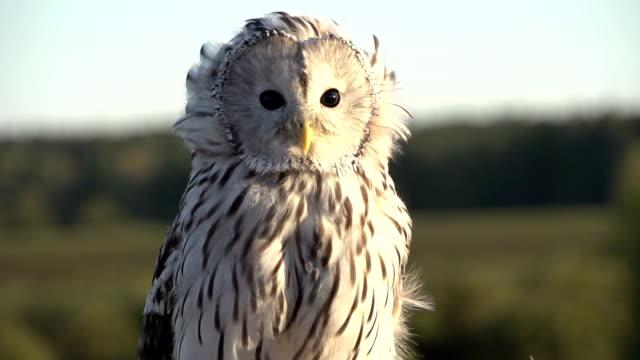 stockvideo's en b-roll-footage met owl closeup in slowmotion - uil