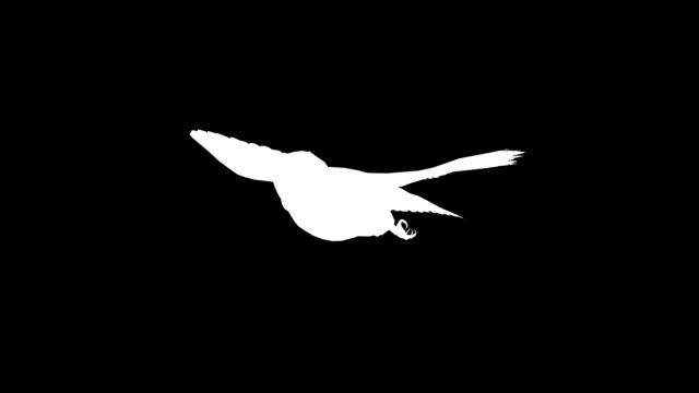フクロウ (単発) のシルエットを滑空 - シルエット点の映像素材/bロール