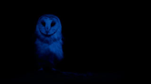 Owl In The Dark Owl looking around in the dark owl stock videos & royalty-free footage