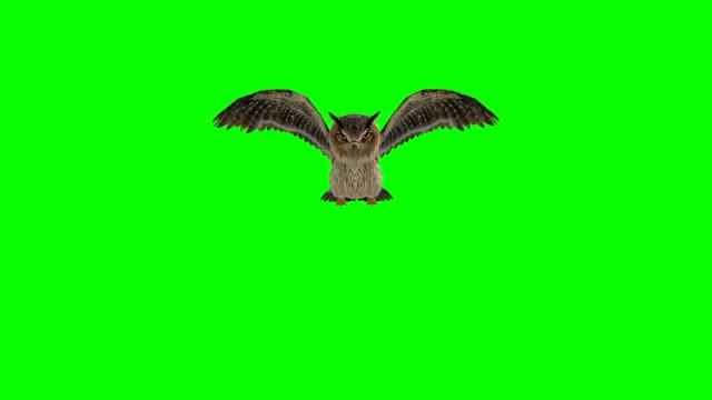 stockvideo's en b-roll-footage met uil groen scherm (loopbare) landing - uil