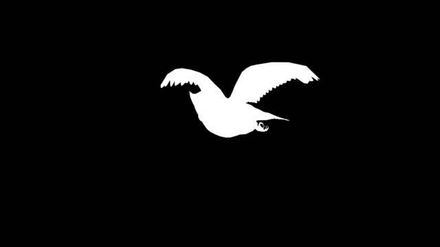 Owl Landing Silhouette video