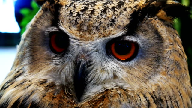owl looking close-up 4k - soltanto un animale video stock e b–roll