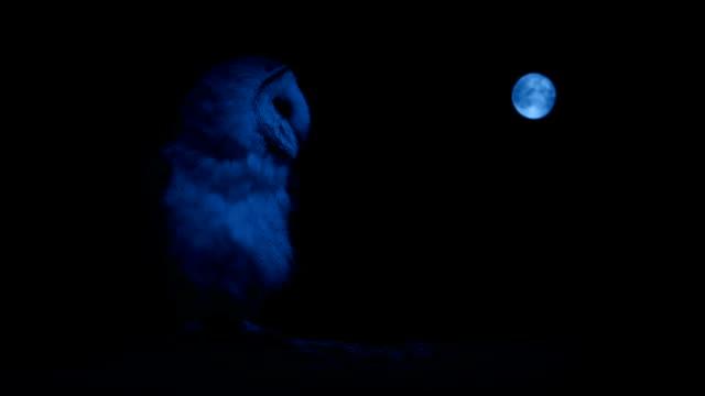 stockvideo's en b-roll-footage met uil op tak met maan in de verte - uil