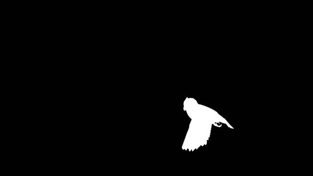 Owl Takeoff Silhouette video