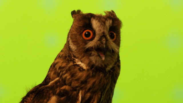 stockvideo's en b-roll-footage met owl - uil