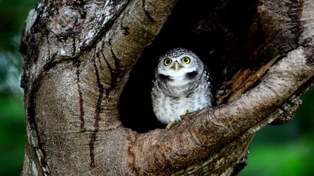 owlet nest. - молодое животное стоковые видео и кадры b-roll