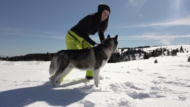 owner playing with her husky in the fresh snow - cane addestrato video stock e b–roll