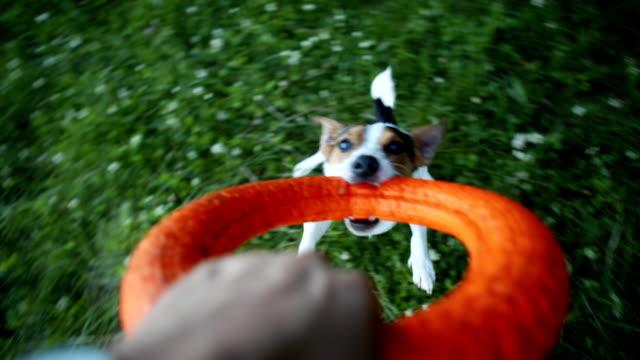 vídeos de stock e filmes b-roll de owner turns the dog in the ring. - puxar