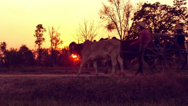 Ox cart at sunset