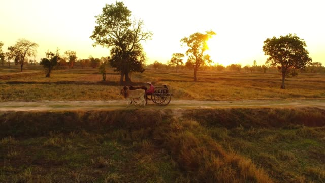 Ox Cart Travelling at Sunset