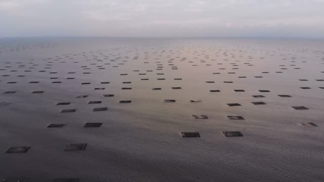 vídeos de stock e filmes b-roll de oyster aquaculture floating farms - aquacultura