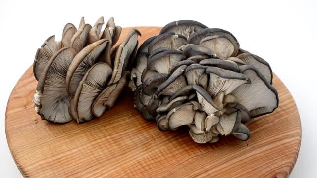 vidéos et rushes de les champignons pleurotes sur une planche. - bivalve
