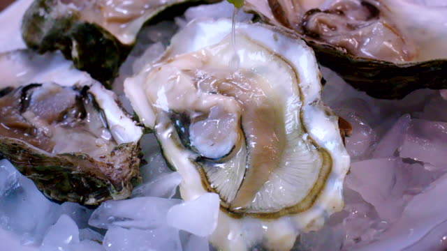 oysters on plate with ice and lemon - seafood stock videos and b-roll footage