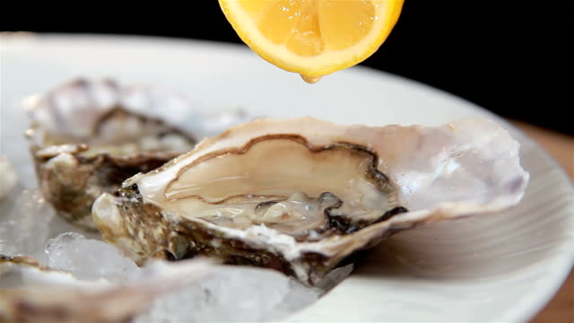 Oysters video